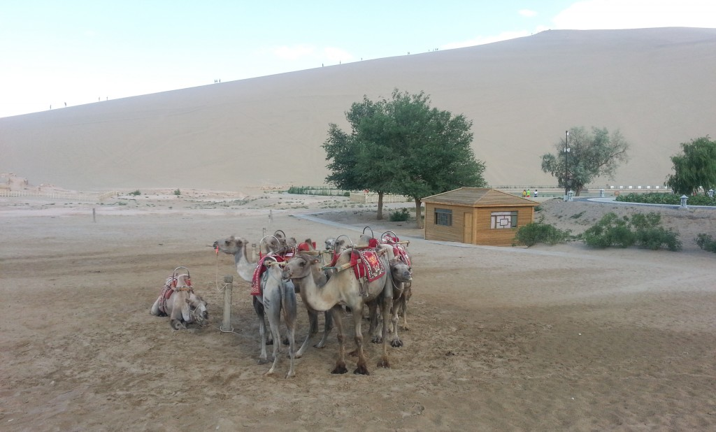 Over Priced Camel Rides