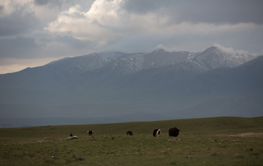 Yaks in the Valley