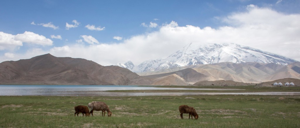 Herds with Mutzagh Ata in the background